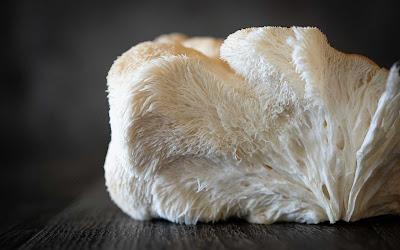 Lion's mane mushroom supply