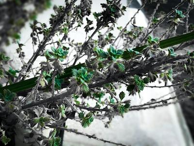 Little green leaves stock image