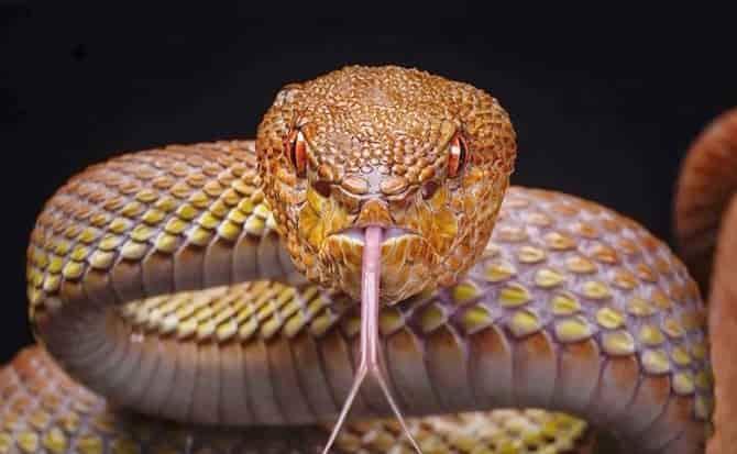 animales, reptiles,