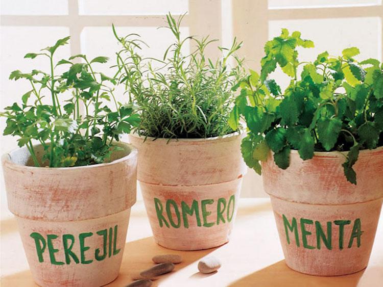 plantas comestibles- Horticultura urbana