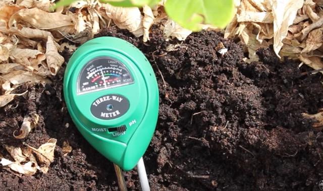 cara menetralkan ph tanah