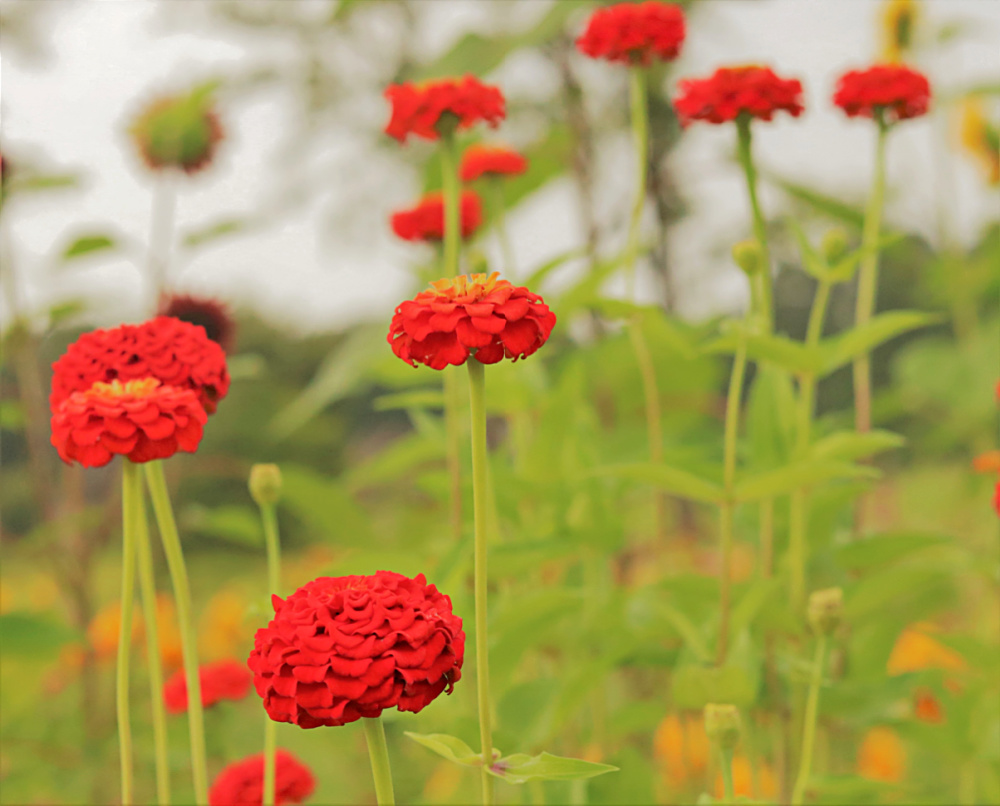 August-gardening-seeds-favorites-recommendation-growing-flowers-athomewithjemma
