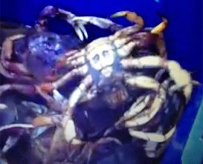 osama bin laden crab footage