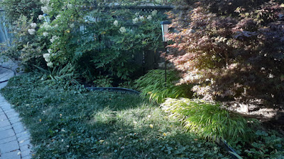 Dufferin Grove Toronto Garden Renovation Before by Paul Jung Gardening Services--a Toronto Organic Gardening Services Company