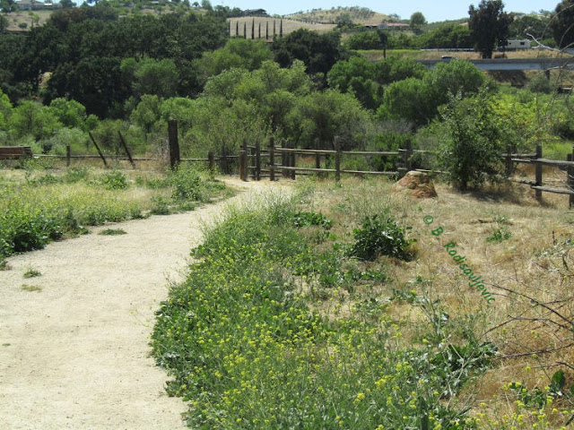 """""""Larry"""" Moore Park in Paso Robles: A Photographic Review - River Access"""