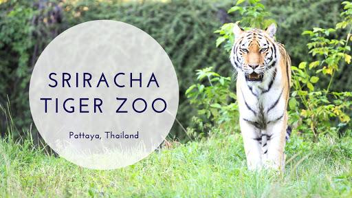 Sriracha Tiger Zoo Pattaya