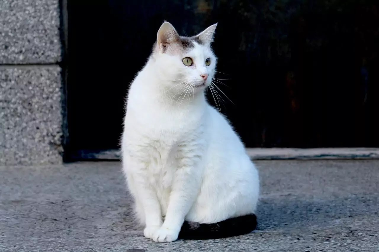 White Cats and Kitty Names