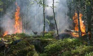 Cara Mencegah, Akibat Dan Penyebab Terjadinya Kebakaran Hutan Dan Lahan