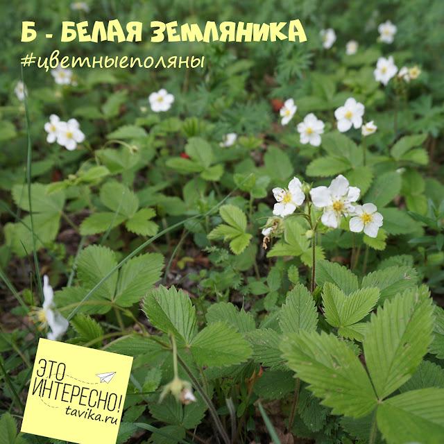 цветы земляники, Крым