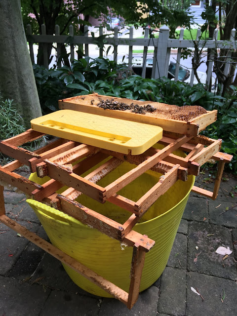bee, beekeeping, combcapper, crush and strain, escape, foundationless. walter t kelly, harvesting, honey, slow shutter, Strainer and Bottler, wax,
