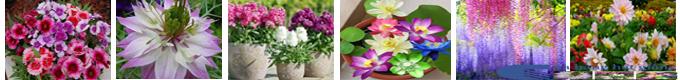 Cửa hàng Hạt giống hoa và rau mầm toàn quốc