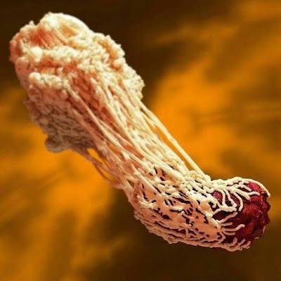 Organismo superior sistema inmunologico