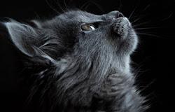 🐱 Los gatos y su conexión espiritual con los humanos
