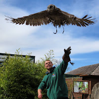 Ireland Photos: Falconry at Tayto Park