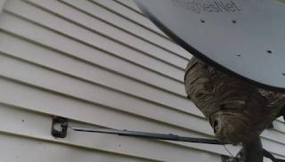 Σήκωσε Drone έξω απ' το σπίτι του. Μόλις ανακάλυψε τι υπήρχε πίσω από τη δορυφορική έπαθε σοκ (video)