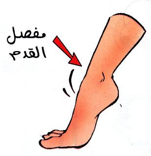 مفصل القدم