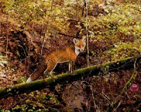 Help this fox help you escape this #Autumn forest! #AutumnGames #FallGames