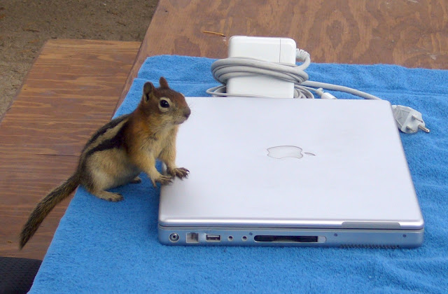 Chipmunk Checking Email by Stewf from flickr (CC-NC-SA)