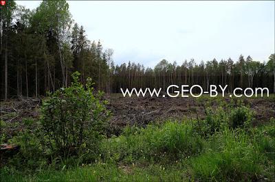 Порубка леса в Налибокской пуще