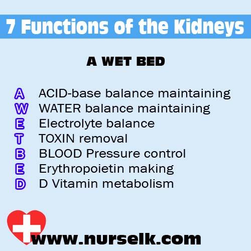 A WET BED - 7 Functions of the Kidneys | Nurselk.com