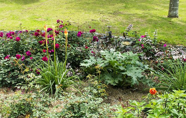 5月の花壇のバラと宿根草