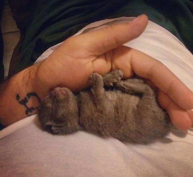 Новорожденного котенка забросили на крышу сарая и оставили умирать