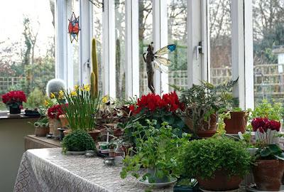 plants, flowers, conservatory,