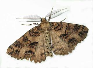 ¿Insectos en tu casa?: Consejos para combatirlos de manera Natural.