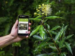 Plant Net - Pl@ntNet - App para identificar plantas