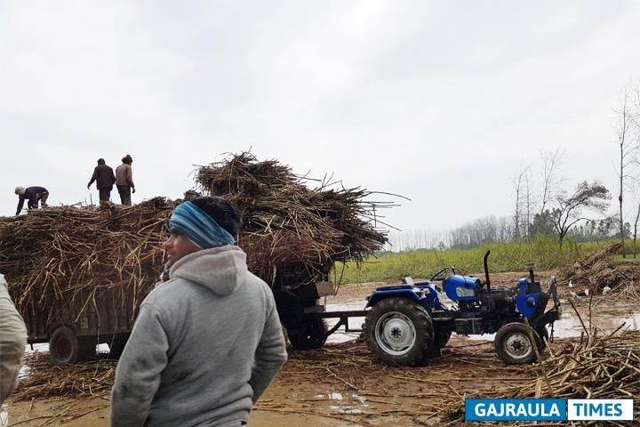 sugarcane-farmer