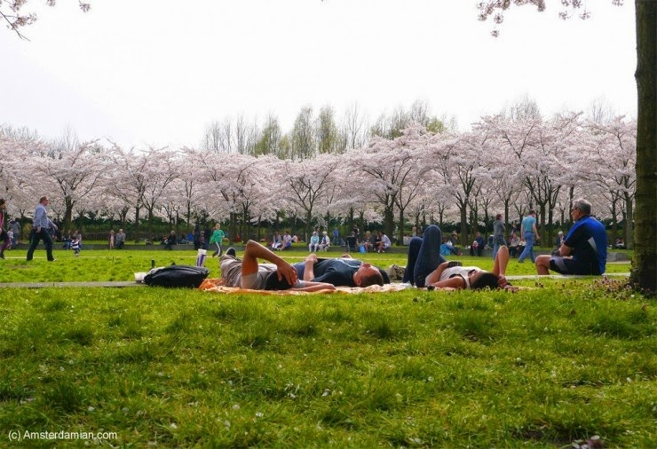 10. Amsterdam, The Netherlands - Top 10 Blooming Cities in Spring