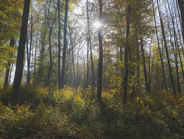 Kafkas Wald | Kierling © Chris Zintzen @ panAm productions