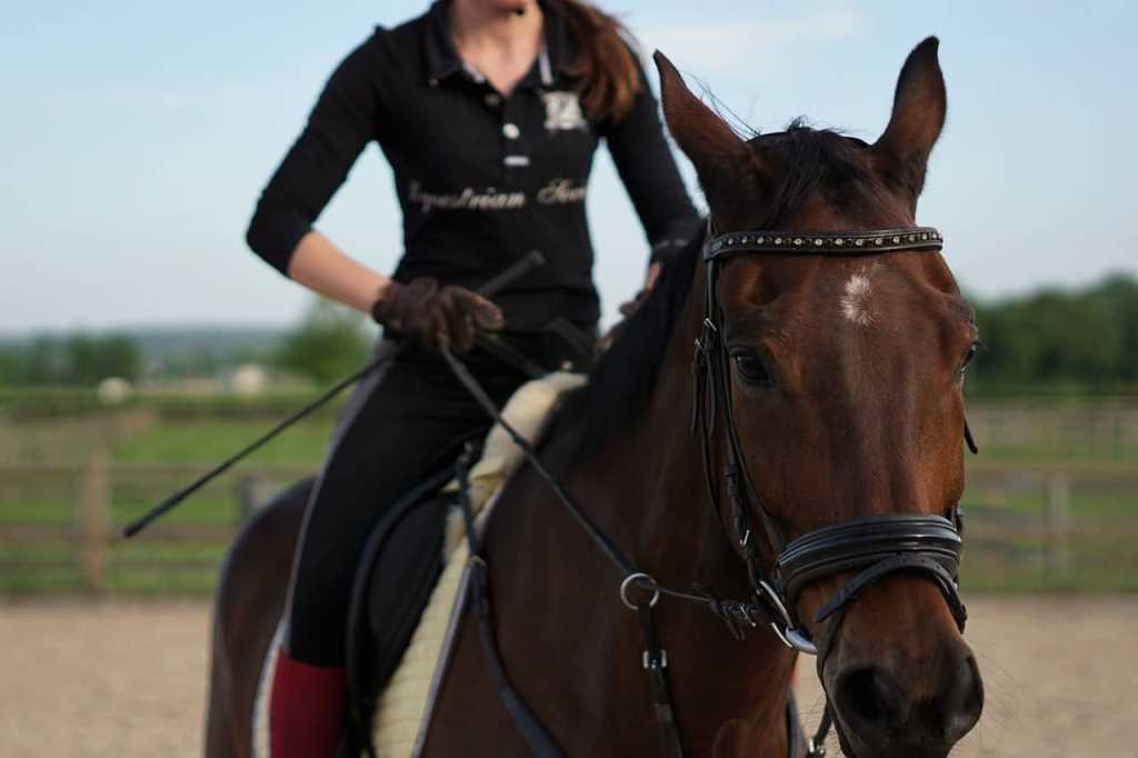 SHOWTIME!: How Farriers Help Horses Show Their Best