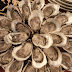 June Evening Oyster Shuck on the Big Bear Patio - Wednesday 6/19