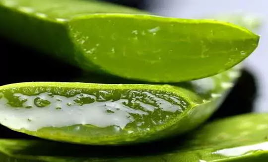 Awesome Benefits of Aloe Vera Skin, Disease, and Other Benefits