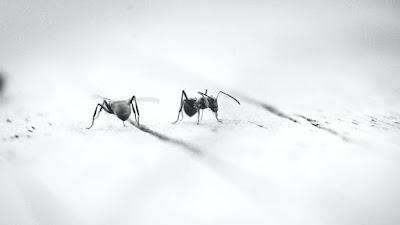 O CDC tem grandes planos para o ingrediente de toranja que repele insetos sanguinários