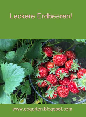 Pin Erdbeeren