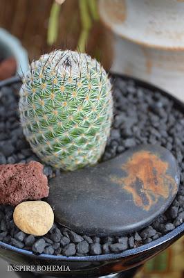 Mammillaria cactus planter - Designer Cactus and Succulent Planters Garden Design Inspire Bohemia - Miami and Ft. Lauderdale Succulent Business