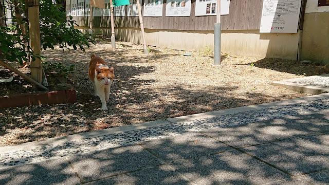 大阪 猫神社 上宮天満宮 天神桃太郎