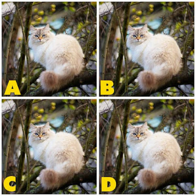 Quiz Diva - Kitty Difference Answers 40 Questions Score 100% image 43