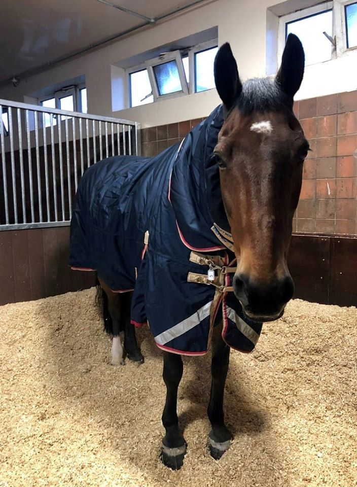 Meet Police Horse Jake Who Asks Of A Cup Of Tea Before Work