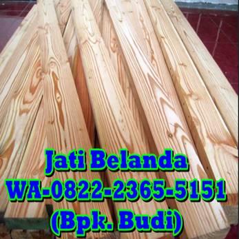 0822 2365 5151 Jual Jati Belanda Di Cirebon Di Jogja Yogyakarta