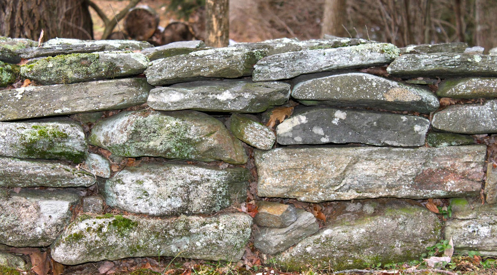 Did You Ever Wonder Who Built All Of The Beautiful Old Stone Walls See Throughout New England Actually Can Them Mid Atlantic