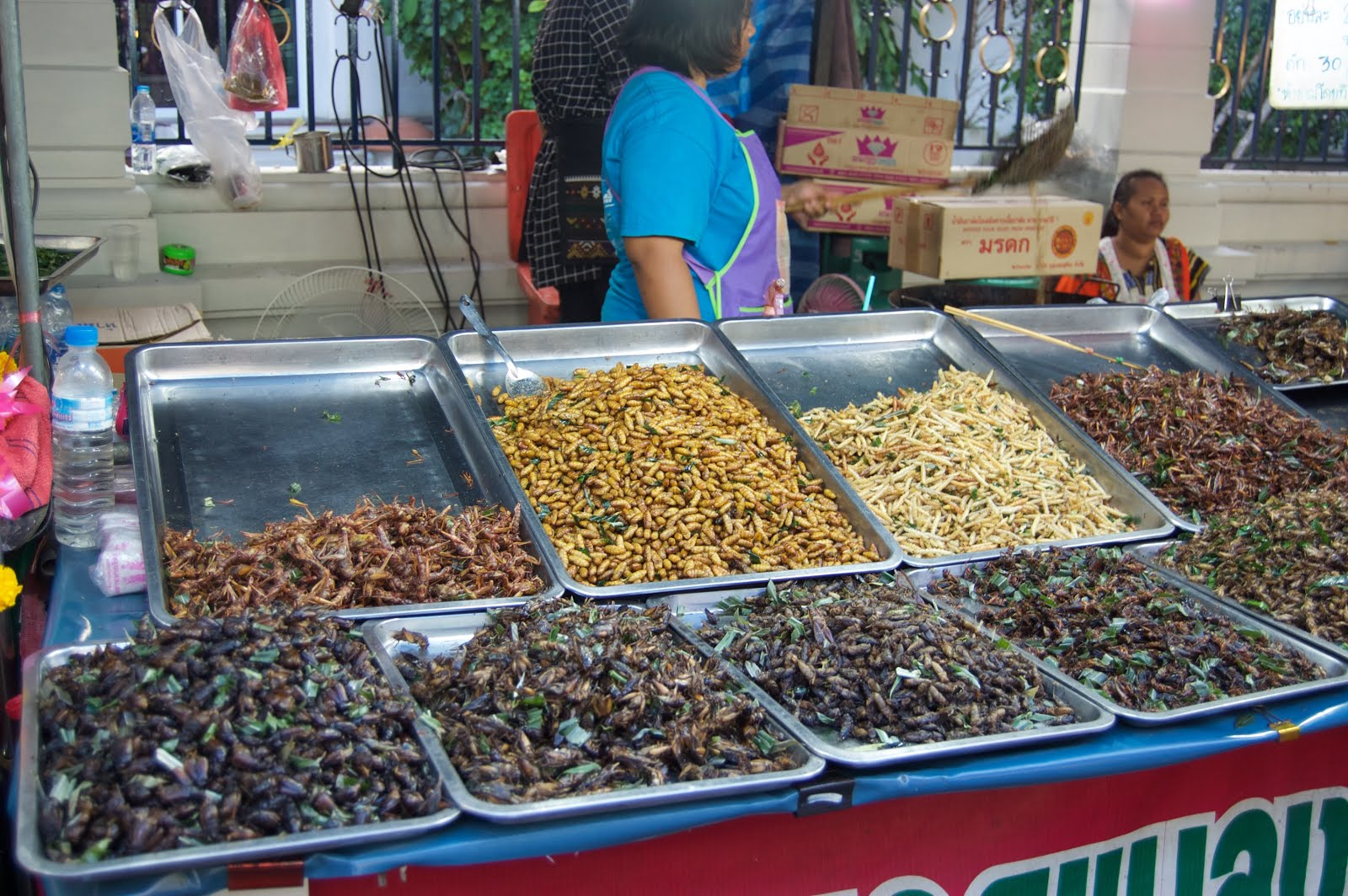 Dried bugs in the Market in Bangkok