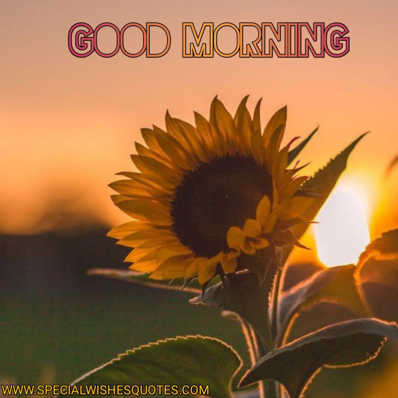krishna good morning image