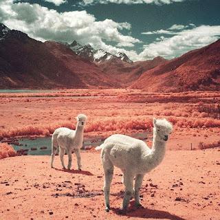 Różowa pustynia