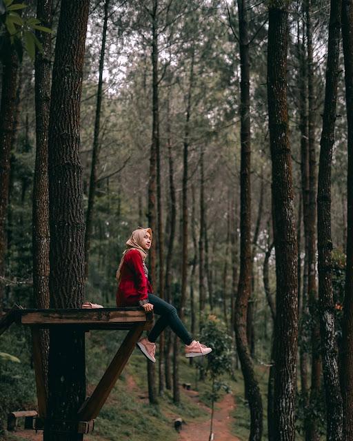 Tiket Masuk Hutan Pinus Kragilan