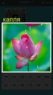 на цветок лотоса проливается капля воды 667 слов 15 уровень