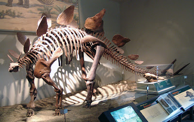 Stegosaurus Fossil in the Field Museum, Chicago