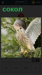 800 слов на ветке дерева сидит птица сокол 7 уровень